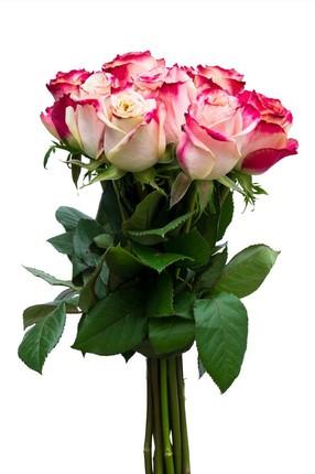 Букет из 15 роз Sweetnes Эквадор