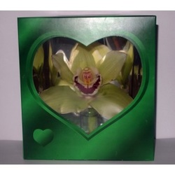 Орхидея в коробочке