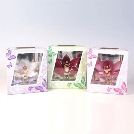 Орхидея в коробочке с бабочками