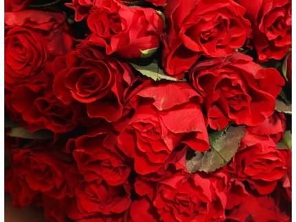 51 красная роза (Россия)