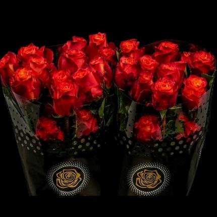 Роза Атомик (Atomic)