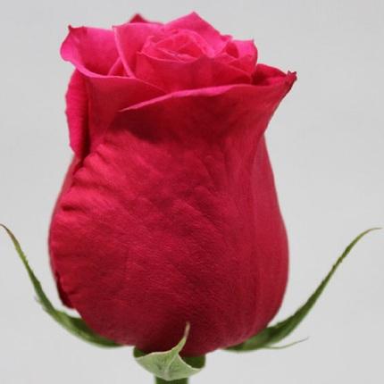 Роза Черри О