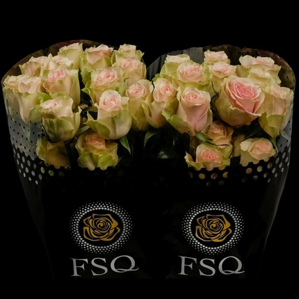 Роза Фрутето