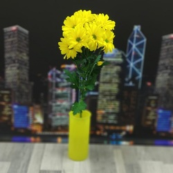 Хризантема кустовая желтая (Бакарди)
