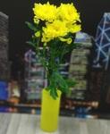 Хризантема кустовая желтая (Балтика)