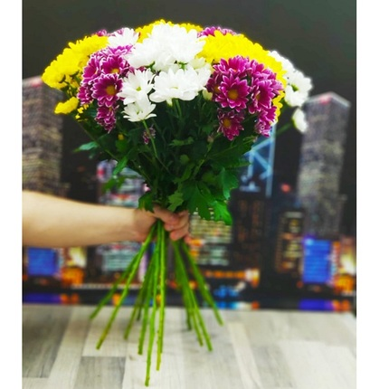 Букет из 15 цветных хризантем (Бакарди)