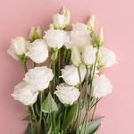 Лизиантус Розита белый (поштучно)