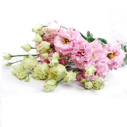 Лизиантус Алиса розовый (поштучно)